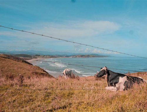 Mythen rund um die Kuh – Teil 1
