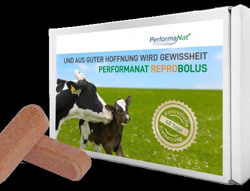 Fruchtbarkeit im Fokus – unser neuer PerformaNat ReproBolus